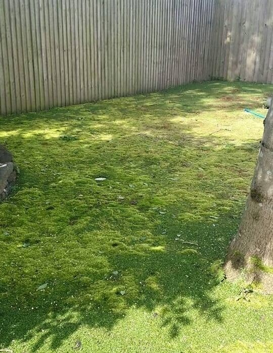 second picture of uncleaned lawn
